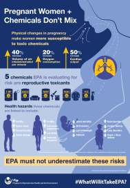 Pregnant women and chemicals infographic